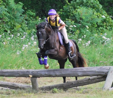 Rocky Mountain Horse eventing