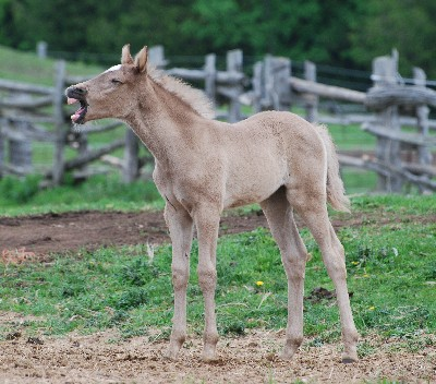weanling tilly